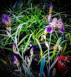 Purple Delights by morningstarskid
