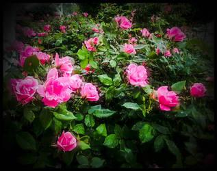 Pretty in Pink by morningstarskid