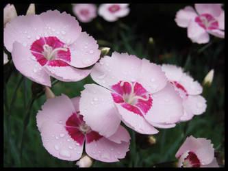 Delicate In Pink by morningstarskid