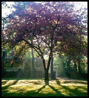 Sunlight Beaty