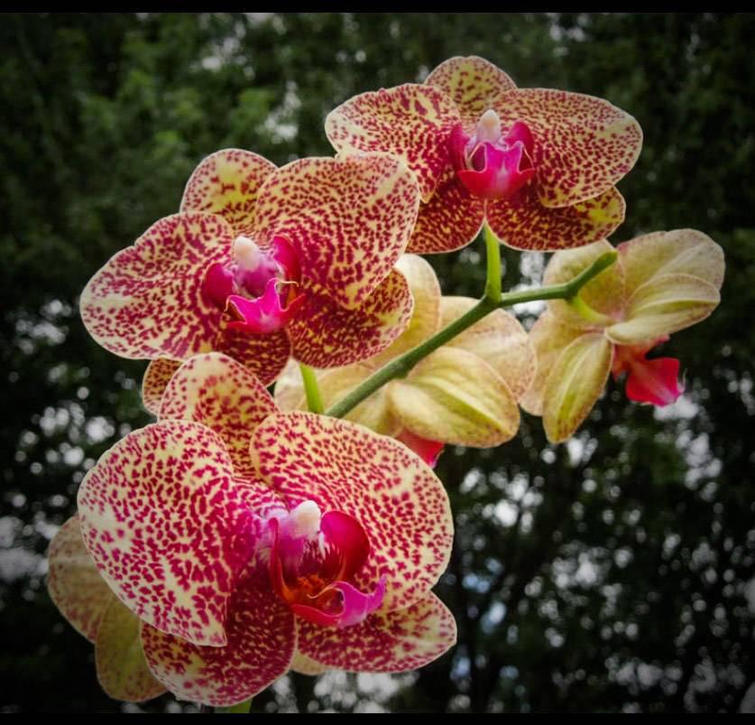 Late Summer Orchids by morningstarskid