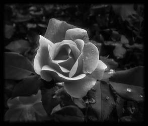 Singular Beauty in Black n White