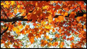 Orange Oak Leaves
