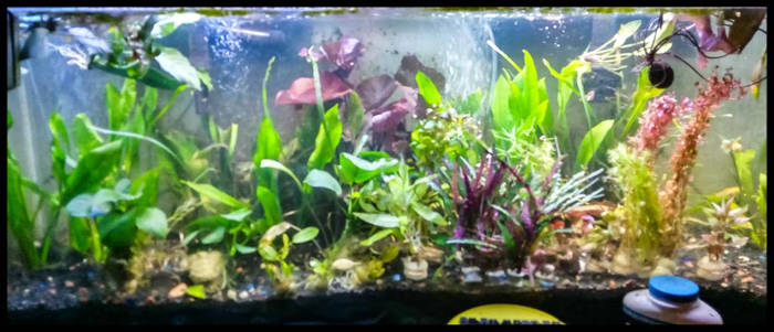 My 55 gallon tank.. NEW PLANTS
