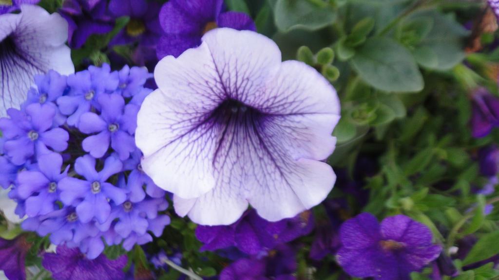 Photo: Purple Flowers by Soul-Reaper-Allison