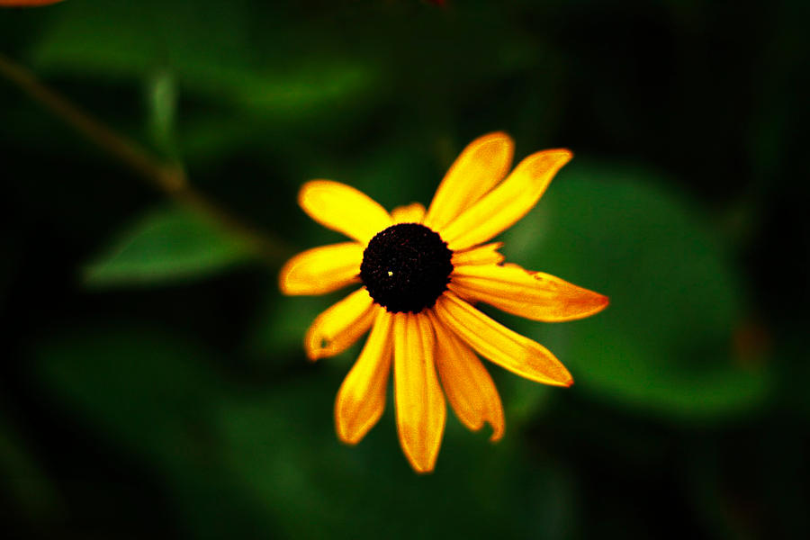 Yellow Flower. by Ethiopia