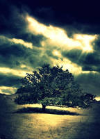 A-AZ Just a Tree by Hell-n-ConsequenceS