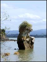 Rock around Omokoroa by eRiQ