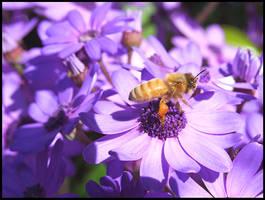 Spring Bee by eRiQ