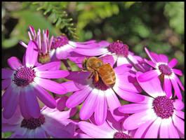 Spring Bee 2 by eRiQ