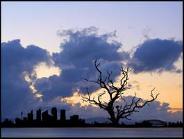 Sydney tree by eRiQ