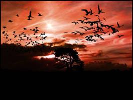 the birds by eRiQ