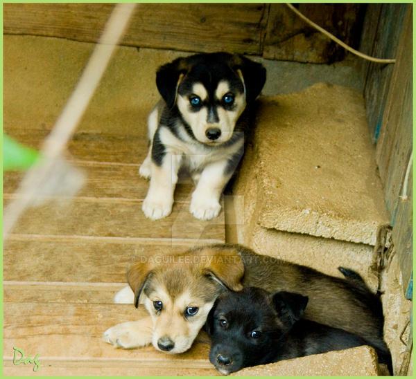 Puppys by daguilee