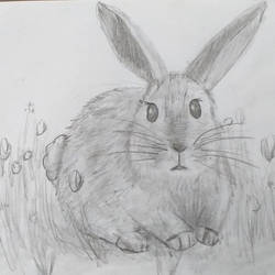 Bunny - pencil