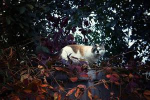 Cat by Kittengrapher