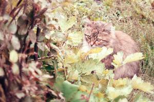 Kitty II by Kittengrapher