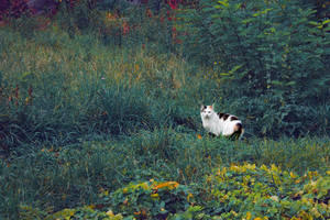 Cat in the park by Kittengrapher