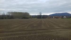 Fields (5)