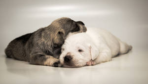 puppy love by Joseph-Belcher