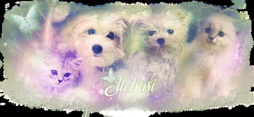 Signature Ellebasi by Linoa170