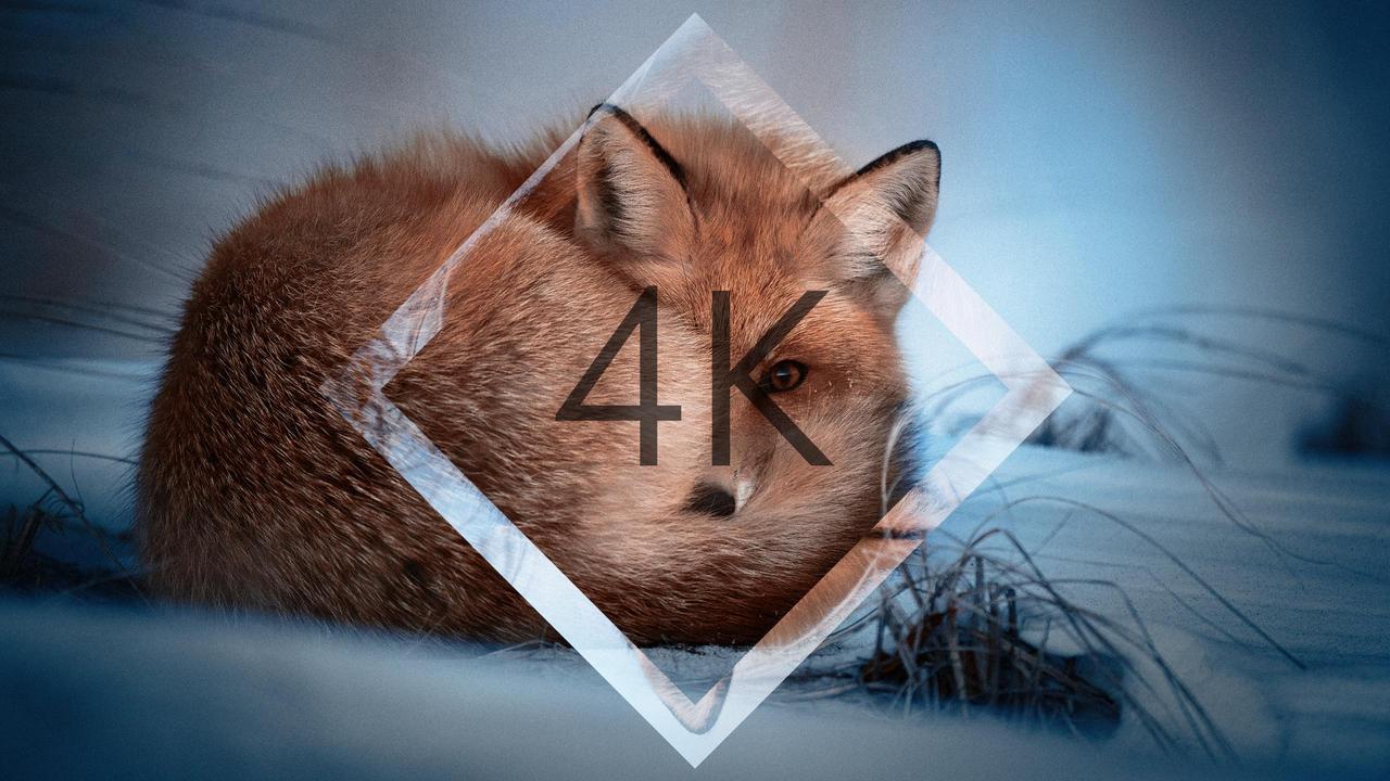 Oc Snow Fox Wallpaper 4k By Total Chuck On Deviantart