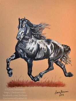 Gorgeous Friesian horse