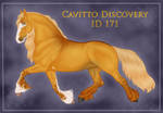 Cavitto Discovery 171