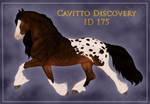 Cavitto Discovery 175