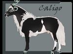 F-286 Caligo