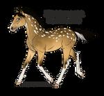Foal 2872