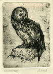 owl by kawachi-a