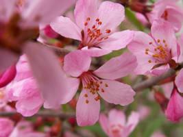 flowers by emsa13