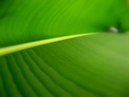 green. by saifii