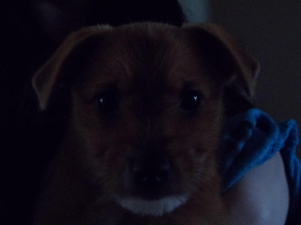 Bailey by Charlie--Lottie