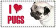 I Heart Pugs Stamp by ShinanaEvangelian