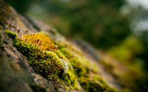 Moss Wallpaper by WouterPera