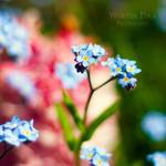 Do not forget me by WouterPera