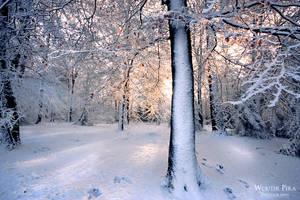 Sunny winter by WouterPera