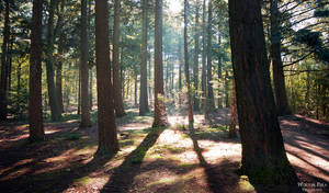 Sunny forest by WouterPera
