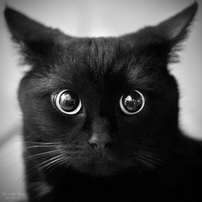 Black by WouterPera