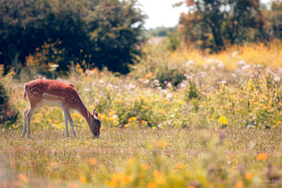 Summer meadow by WouterPera