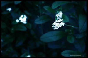 Beauty by Creamydigital