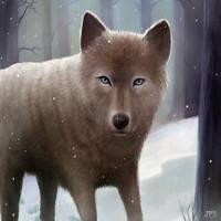 Wolf by juhamattipulkkinen