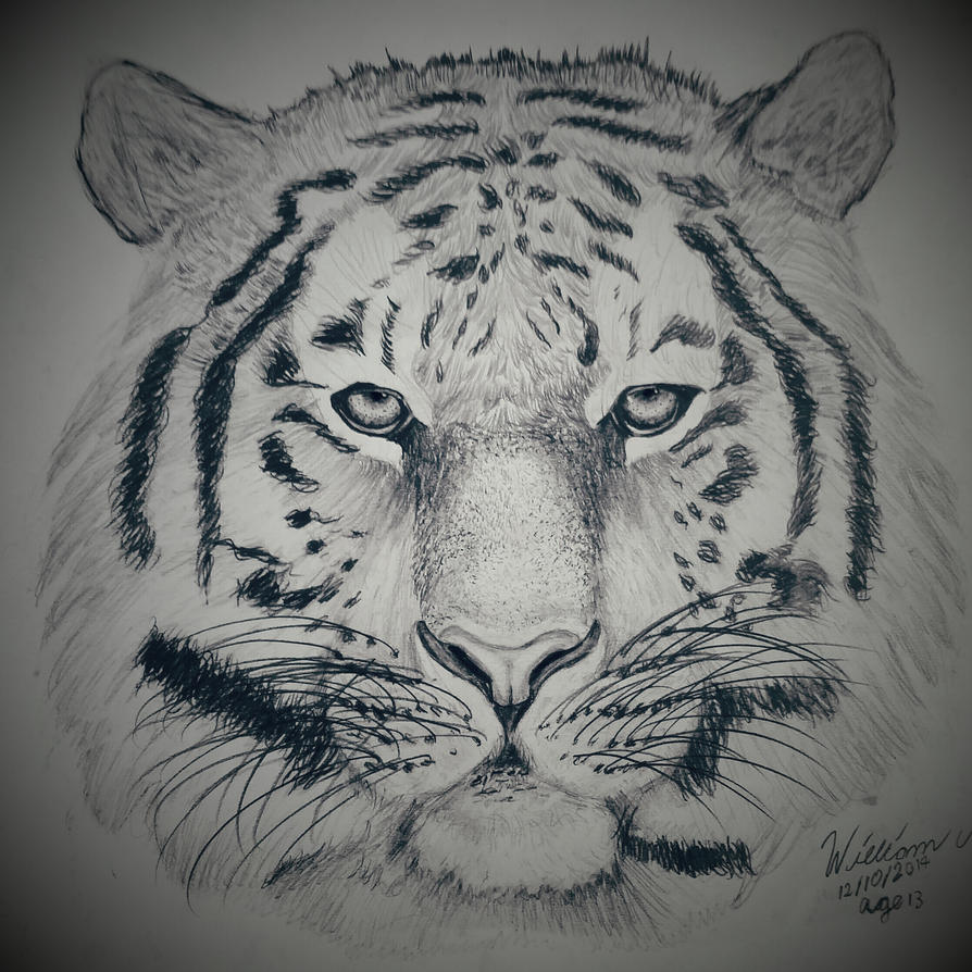 Tiger pencil drawing by dubz002