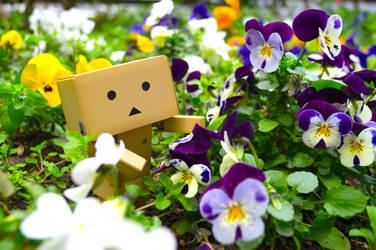 Danboard in FlowerGarden by haruyasy