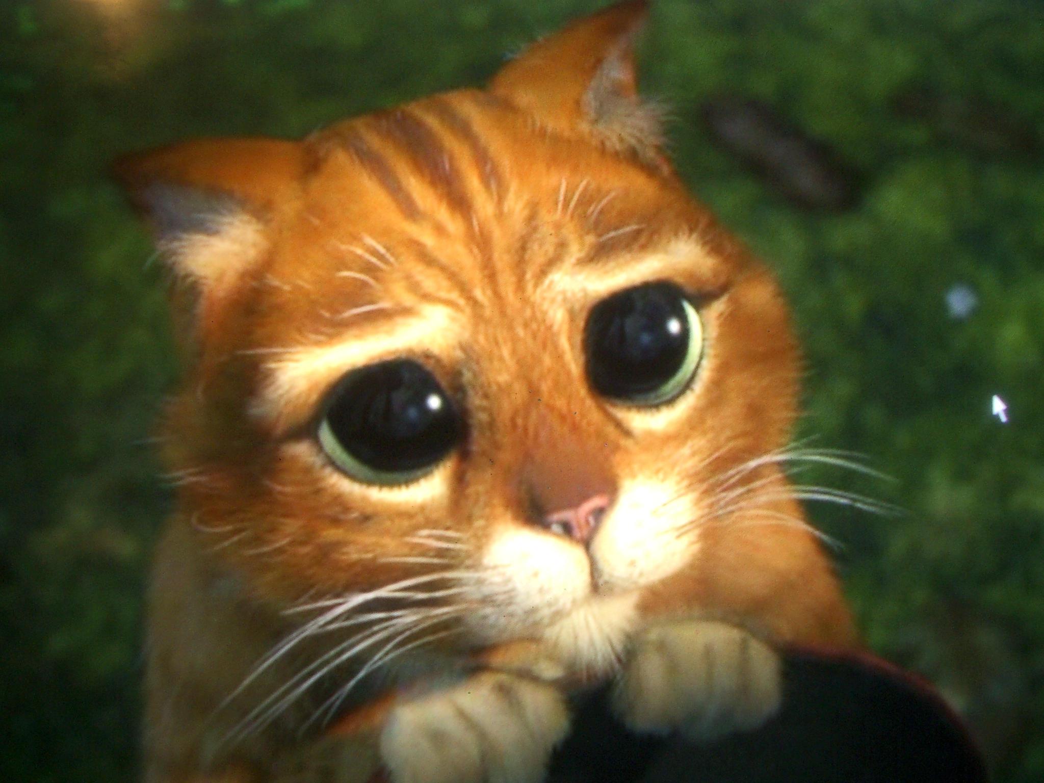 Cat Shrek Gif Return Eyes