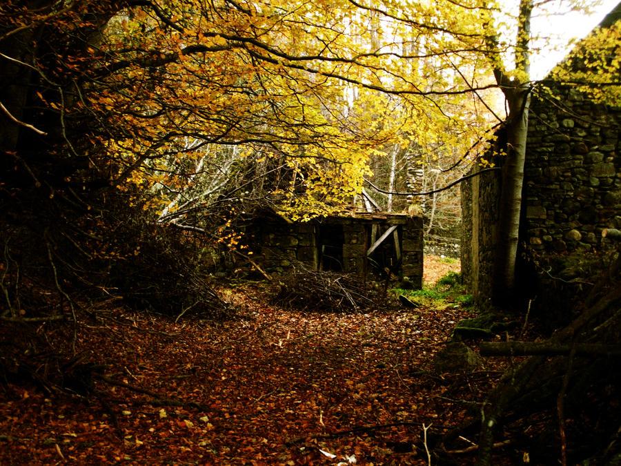 cottage ruins overgrown garden by GRANNYSATTICSTOCK
