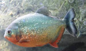 Granny On Safari Glitter Fish