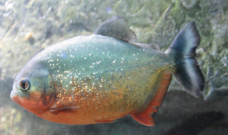 Granny On Safari Glitter Fish by GRANNYSATTICSTOCK