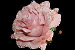 Grannysatticstock Pink Glitter Rose Side View